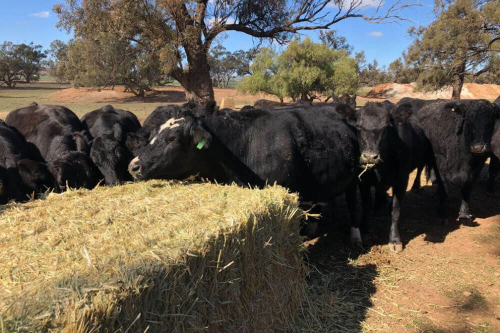 Nutritional Feed Supplies Hay